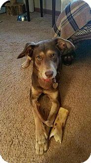 Doberman Pinscher Mix Dog for adoption in Southbury, Connecticut - Jessie