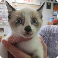Adopt A Pet :: Cooper (Cocoa Center) - Cocoa, FL