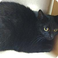Adopt A Pet :: Lanette - Avon, OH
