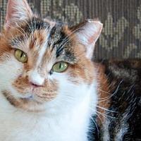 Adopt A Pet :: Nouna - Santa Rosa, CA