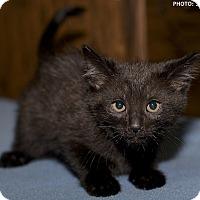 Adopt A Pet :: Aggie - Medina, OH