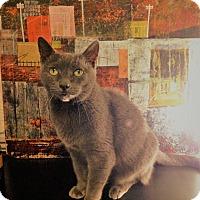 Adopt A Pet :: Ashley - Marina del Rey, CA