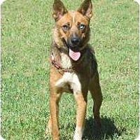 Adopt A Pet :: Flora - Glen Allen, VA