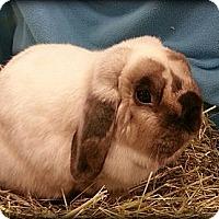 Adopt A Pet :: PepperJack - Williston, FL