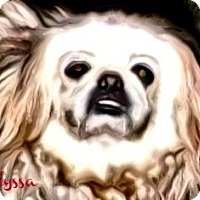 Adopt A Pet :: Alyssa-NY - Mays Landing, NJ