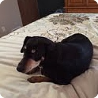 Adopt A Pet :: Dorrie - Lakeville, MN