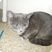 Adopt A Pet :: Salome - Medina, OH
