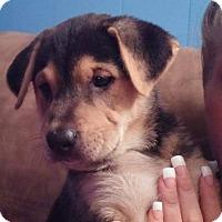 Adopt A Pet :: Angel - Charlestown, RI