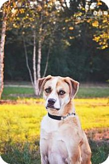 Boxer/Scottie, Scottish Terrier Mix Dog for adoption in Fayetteville, Georgia - Blaze