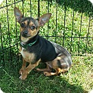 Adopt A Pet :: Bitsy S.A.M Courtesy listing - Sherman, CT