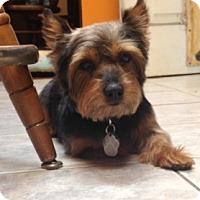 Adopt A Pet :: Max - Beavercreek, OH