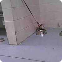 Adopt A Pet :: A256160 - Conroe, TX