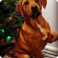 Adopt A Pet :: Duke - Kimberton, PA