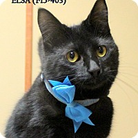 Adopt A Pet :: ELSA - Tiffin, OH