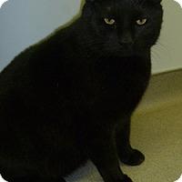 Adopt A Pet :: Frankie - Hamburg, NY