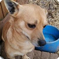 Adopt A Pet :: GIZMO - Anderson, SC