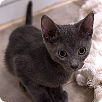 Adopt A Pet :: Bay - Addison, IL