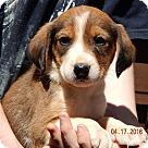 Adopt A Pet :: Deuce (6 lb)