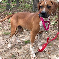 Adopt A Pet :: Ember - Hagerstown, MD