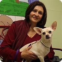 Adopt A Pet :: Sugar - Elyria, OH