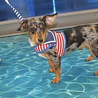 Adopt A Pet :: Fin - Lodi, CA