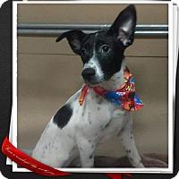 Adopt A Pet :: Trooper - Mesa, AZ