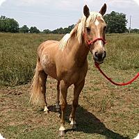 Adopt A Pet :: Spirit - Free - Seneca, SC