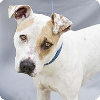 Adopt A Pet :: Leela - Lincolnton, NC