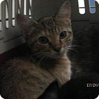 Adopt A Pet :: Mini - Queenstown, MD