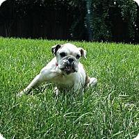 Adopt A Pet :: Mertyl - Killeen, TX