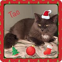 Adopt A Pet :: Tac - Harrisburg, NC