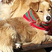Adopt A Pet :: Lucky - Apache Junction, AZ