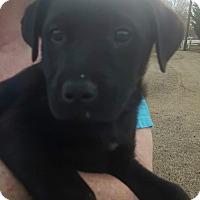 Adopt A Pet :: Jazz - CRANSTON, RI