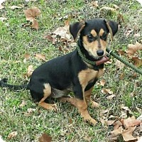 Adopt A Pet :: Toots - Livingston, TX