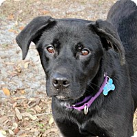 Adopt A Pet :: Donner - Loxahatchee, FL