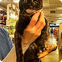 Adopt A Pet :: Alicia - Cranford/Rartian, NJ
