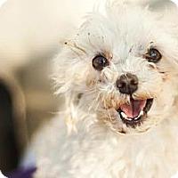 Adopt A Pet :: Demon - Fresno, CA
