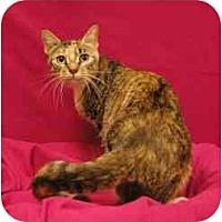 Adopt A Pet :: Olive - Sacramento, CA