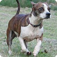 Adopt A Pet :: Oakley - Austin, AR