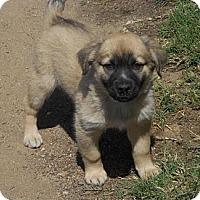Adopt A Pet :: BELLA - Torrance, CA