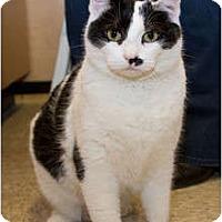 Adopt A Pet :: Penny - Irvine, CA