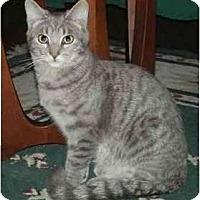Adopt A Pet :: Mystro - Portland, OR