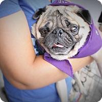 Adopt A Pet :: Craig - Austin, TX