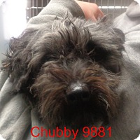 Adopt A Pet :: Chubby - baltimore, MD