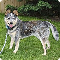 Adopt A Pet :: Bond - Delano, MN