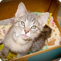Adopt A Pet :: Merlin - Ann Arbor, MI