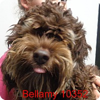 Adopt A Pet :: Bellamy - baltimore, MD