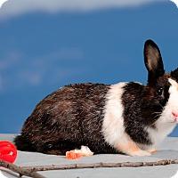 Adopt A Pet :: Zu Zu - Marietta, GA