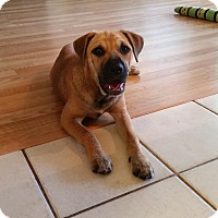Adopt A Pet :: Daisy - Daleville, AL