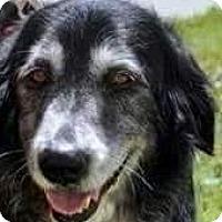 Adopt A Pet :: Angela - Baltimore, MD